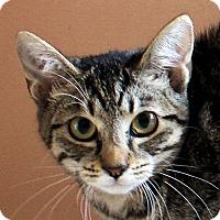Adopt A Pet :: Darla - Morganton, NC
