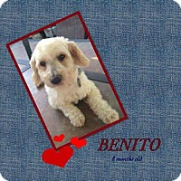 Adopt A Pet :: Bentio - LAKEWOOD, CA