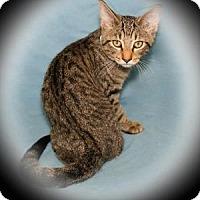 Adopt A Pet :: Thundercloud - Bradenton, FL