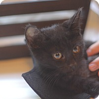 Adopt A Pet :: Batman - Los Angeles, CA