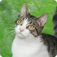 Adopt A Pet :: Angelina - Elmwood Park, NJ