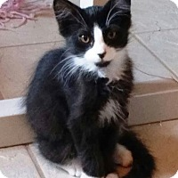 Adopt A Pet :: Mufasa - Riverside, CA