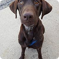 Adopt A Pet :: SAM - Deer Park, NY