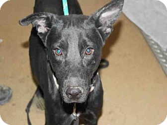 German Shepherd Dog Mix Dog for adoption in Bonita, California - SHEILA