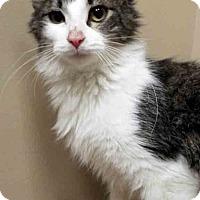 Adopt A Pet :: ADOPTED!!!   Kiya - Oswego, IL