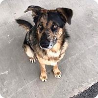 Adopt A Pet :: Inman - Westminster, CO