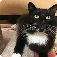 Adopt A Pet :: Dexter - Foothill Ranch, CA