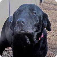 Adopt A Pet :: Dee Dee *Pending* - Logan, UT