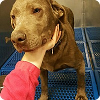 Adopt A Pet :: Diesel - Yorktown, VA