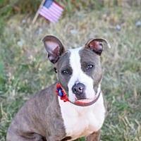 Adopt A Pet :: Chex/Monster - Manhattan, NY