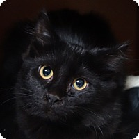 Adopt A Pet :: Avalon - Greenfield, IN