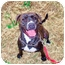 Photo 1 - American Pit Bull Terrier Mix Dog for adoption in Jersey City, New Jersey - Duchess