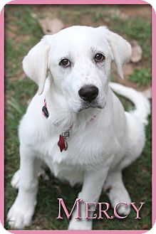 Mercy Adopted Adopted Puppy Tulsa Ok Great