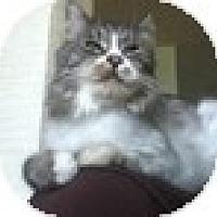 Adopt A Pet :: Milo - Vancouver, BC