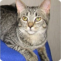 Adopt A Pet :: Ollie - Norwich, NY