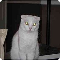 Adopt A Pet :: Tizzy - Davis, CA