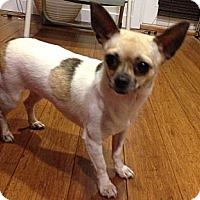 Adopt A Pet :: Louise - San Francisco, CA