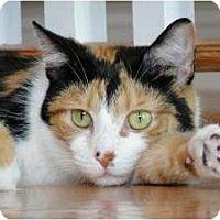 Adopt A Pet :: Lila - Chicago, IL