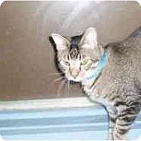 Adopt A Pet :: Bodine - Hamburg, NY