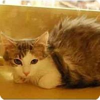 Adopt A Pet :: Stuart - Modesto, CA