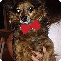 Adopt A Pet :: Anita - Brea, CA