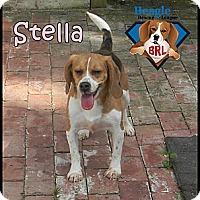 Adopt A Pet :: Stella - Yardley, PA