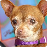 Adopt A Pet :: Nugget - Burbank, CA