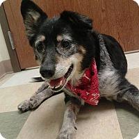 Adopt A Pet :: Barney - Schererville, IN