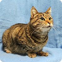 Adopt A Pet :: Beyonce - Greensboro, NC