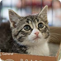 Adopt A Pet :: General - Merrifield, VA