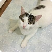 Adopt A Pet :: Vann - Chesapeake, VA