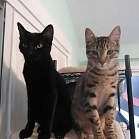 Adopt A Pet :: Chunk and B.J. - Dale City, VA