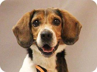 Beagle Mix Dog for adoption in Transfer, Pennsylvania - Banner