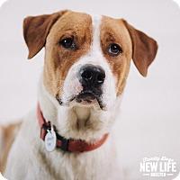 Adopt A Pet :: Wesson - Portland, OR