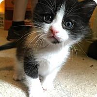 Adopt A Pet :: Cornelius - Phillipsburg, NJ