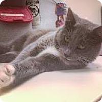 Adopt A Pet :: Duke - New York, NY