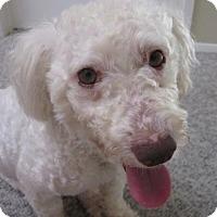 Adopt A Pet :: Thomas - carlsbad, CA