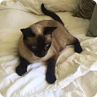 Adopt A Pet :: Timba - Encinitas, CA