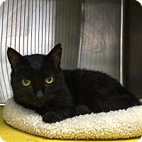 Adopt A Pet :: Ronald - Chico, CA