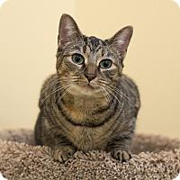 Adopt A Pet :: A..  Bianca - Mooresville, NC