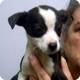 Montgomery | Adopted Puppy | 8595 | Alexandria, VA | Jack ...