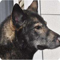 Adopt A Pet :: Malachai - BC Wide, BC