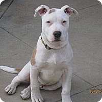 Adopt A Pet :: SAWYER - Torrance, CA