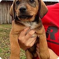 Adopt A Pet :: Rafiki - Richmond, VA