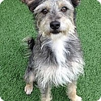 Adopt A Pet :: Banjo - Santa Ana, CA