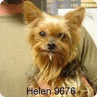 Adopt A Pet :: Helen - baltimore, MD