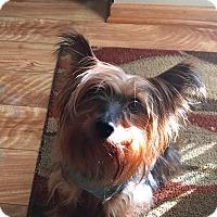 Adopt A Pet :: PIPPI - Minnetonka, MN