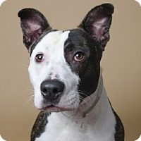 Adopt A Pet :: Hank - Port Washington, NY