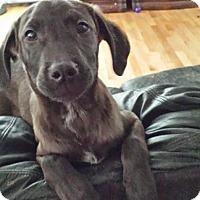Adopt A Pet :: Zac - Perris, CA