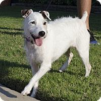 Adopt A Pet :: Britta In Austin-ADOPT PENDING - San Antonio, TX